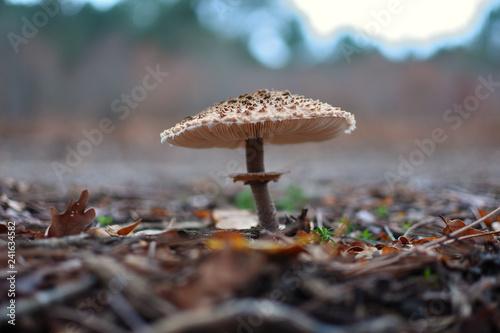 Fotografie, Obraz  gros plan sur un champignon