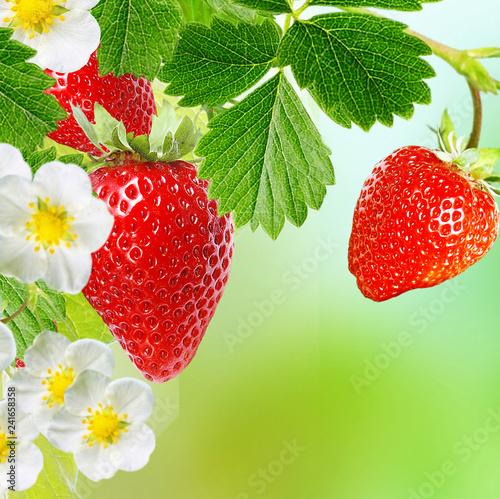 strawberry ripe garden