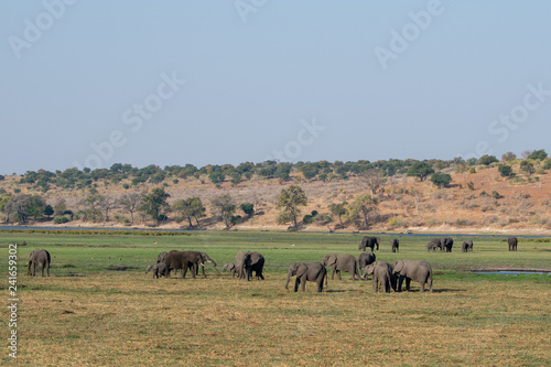 Fotografie, Obraz  herd of elephants