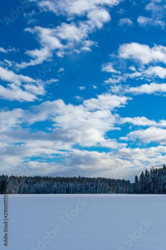 Fotografie, Obraz  Sun Shines On Freshly Fallen Snow