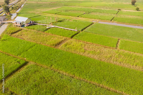 Poster Rijstvelden rice field and hut aerial view