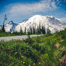 Stylized Roadside View Of Natural Wildflowers With Mt Rainier Background