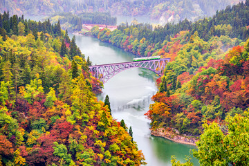 FototapetaJR Tadami Line Train on the Bridge across Tadami River with Colourful Maple Tree on Hillside in Autumn, Fukushima, Japan