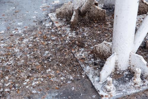 Fototapeta premium nieczysty kupa gołębi ptak grunge