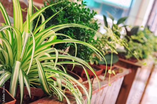 Garden Poster Plant Outdoor flower pots for small garden, patio or terrace