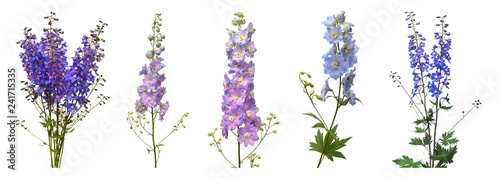 Fototapety, obrazy: Collection beautiful blue dolphinium flower isolated on white background. Flat lay, top view. Floral pattern, object. Nature concept