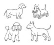 Dogs of different breeds in outlines (set5) - vector illustration
