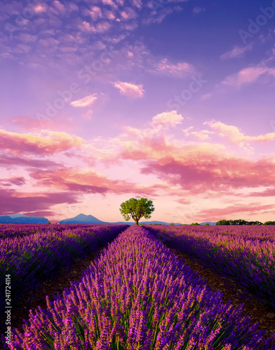 Photo  Tree in lavender field at sunset in Provence