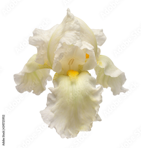 Poster Iris Iris flower isolated on white background. Easter. Summer. Spring. Flat lay, top view. Love. Valentine's Day. Floral pattern, object. Nature concept