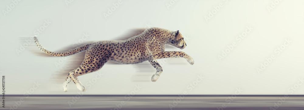 Fototapeta A beautiful cheetah running