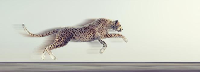A beautiful cheetah running