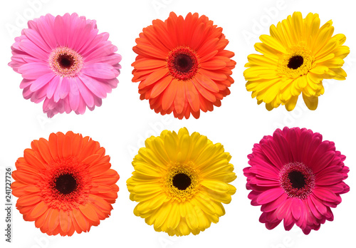 Fototapeta Collection beautiful delicate flowers gerberas isolated on white background. Fashionable creative floral composition. Summer, spring. Flat lay, top view obraz na płótnie