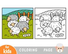Coloring Book, Five Sheep