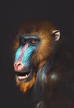 Portrait Of A Primate
