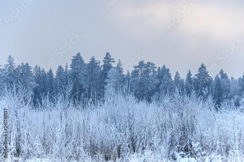 Fotobehang Lavendel Landscape in winter at sunset. Grass covered snow