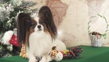 Papillon Dog With Soft Toys Near Christmas Tree