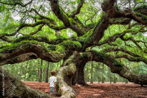 Pinturas sobre lienzo  angel oak tree in John's Island South Carolina