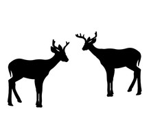 Animals-Two Young White Tail Fawn Silhouettes