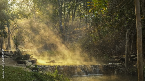 Foto auf Acrylglas Wald im Nebel view morning of hot water flowing with streaming around with forest and sun light background, Tha Pai Hot Spring or Pong Nam Ron Tha Pai, Pai District, Mae Hong Son, northern of Thailand.