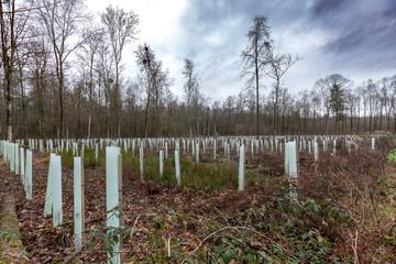 Junge Bäume mit Plastikschutz