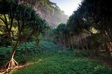 Hawaiian Burial Ground