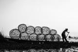 Rybak na Inle jeziorze w Myanmar - 241761708