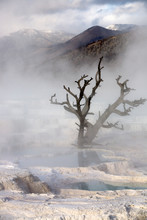 Mammoth Hot Springs Near Canary Spring In Yellowstone National Park, Wyoming.