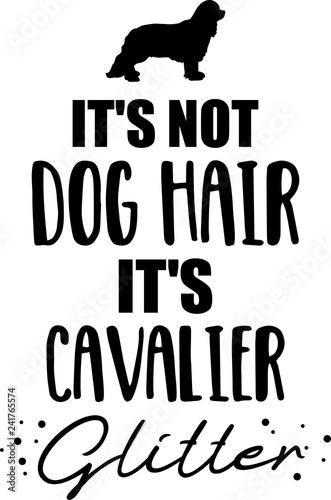 Fotografia It's not dog hair, it's Cavalier glitter