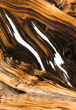 Tree Bark Of Ancient Bristleco...