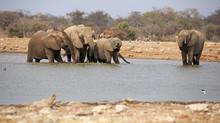 Elefanten Am Wasserloch Klein Namutoni