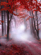 canvas print picture -      Mystical red forest