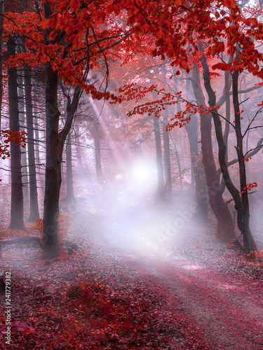 Photo Stands Lavender Mystical red forest