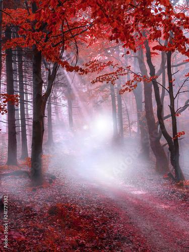 Foto auf Leinwand Lavendel Mystical red forest