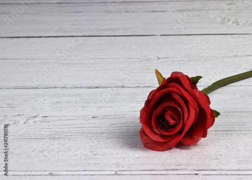 single red rose on a white back ground