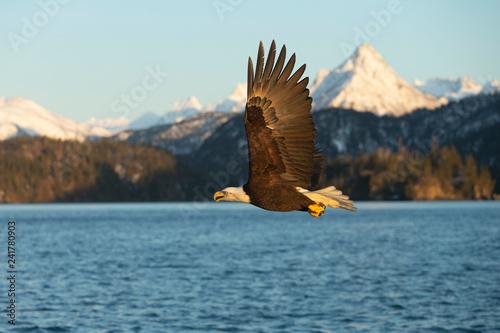 In de dag Eagle American Bald Eagle in Homer Alaska, USA