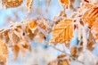 canvas print picture - Winter Wald Schnee Baum Blätter Raureif