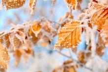 Winter Wald Schnee Baum Blätt...