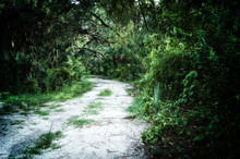 Early Evening View Of Abandoned Dirt Road  Inside Of An Overgrown Subtropical Jungle Wilderness Area In Estero Florida, Stylized And Desaturated.