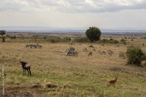 Foto op Plexiglas Afrika Zebra