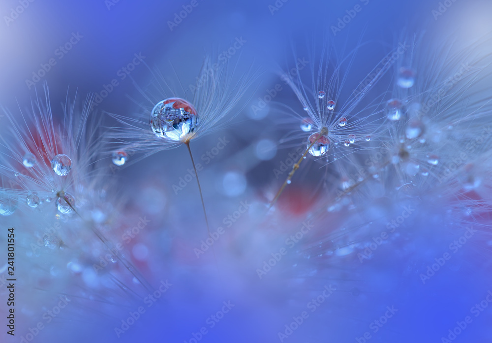 Fototapety, obrazy: Abstract macro photo with dandelion and water drops.Artistic Background for desktop. Flowers made with pastel tones.Tranquil abstract closeup art photography.Print for Wallpaper.Floral fantasy design