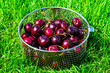 canvas print picture - Ripe cherry on background of green grass