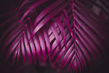 Deep dark purple colored palm leaves pattern. Creative layout, toned image filter effect - 241809736