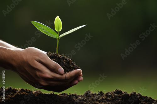 Poster Vegetal Hands holding and caring a green young plant