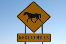 Horse Crossing Next 10 Miles