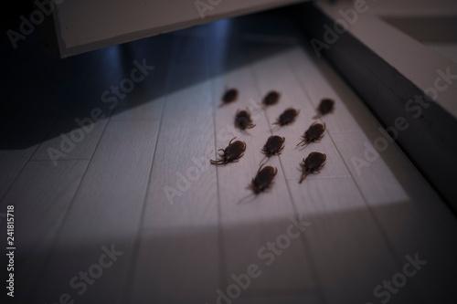 複数のゴキブリ