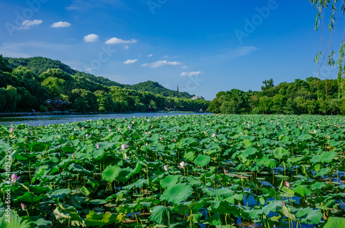 Photo Stands Green Landscape of West Lake with lotus leaves, and Baochu Pagoda on top of Baoshi Hill, in Hangzhou, China