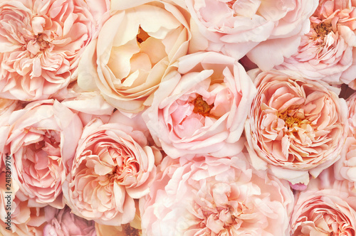Summer blossoming delicate rose blooming flowers festive background, pastel and soft bouquet floral card, selective focus, toned