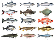 Fishes Icons Set