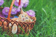 Cute Little Red Kitten Sitting In A Basket On A Flower Lawn