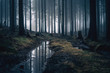 Leinwandbild Motiv Wald mit Nebel und Spiegelung in Pfütze im Vordergrund